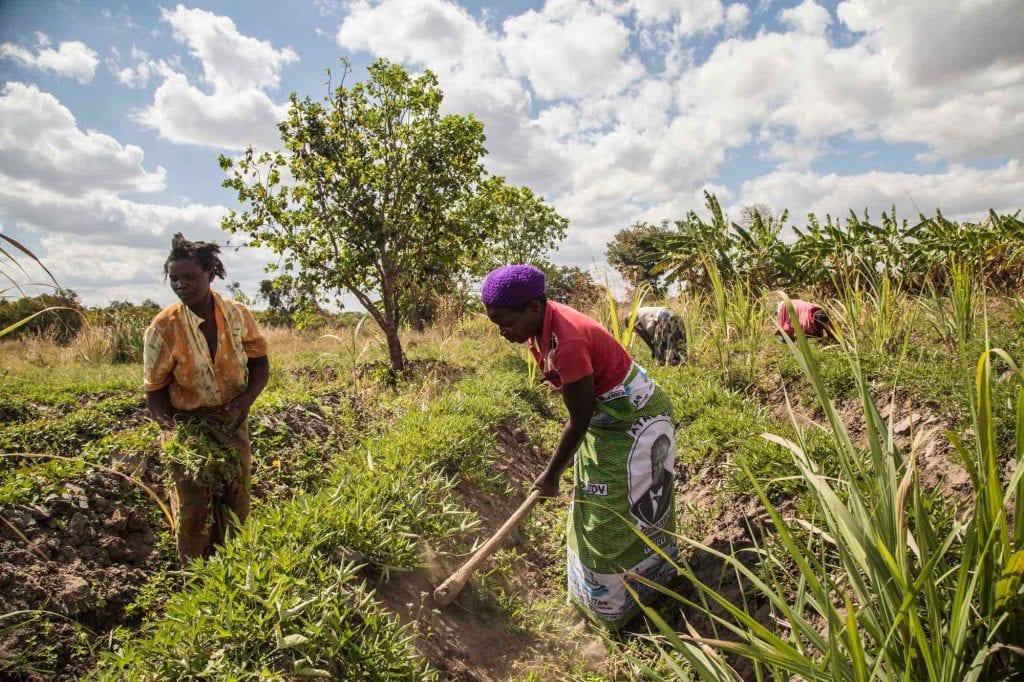 COMACO Zambia